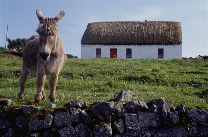 Galway & Aran Islands Day Tour