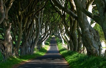 Thumb_dark_hedges__tourism_ireland_